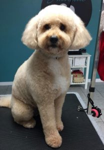 Windsor Dog Groomer