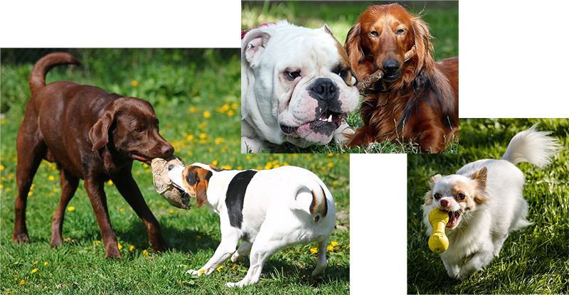 Complete dog daycare service in Windsor and Lakeshore - a Doggy Daycare provider