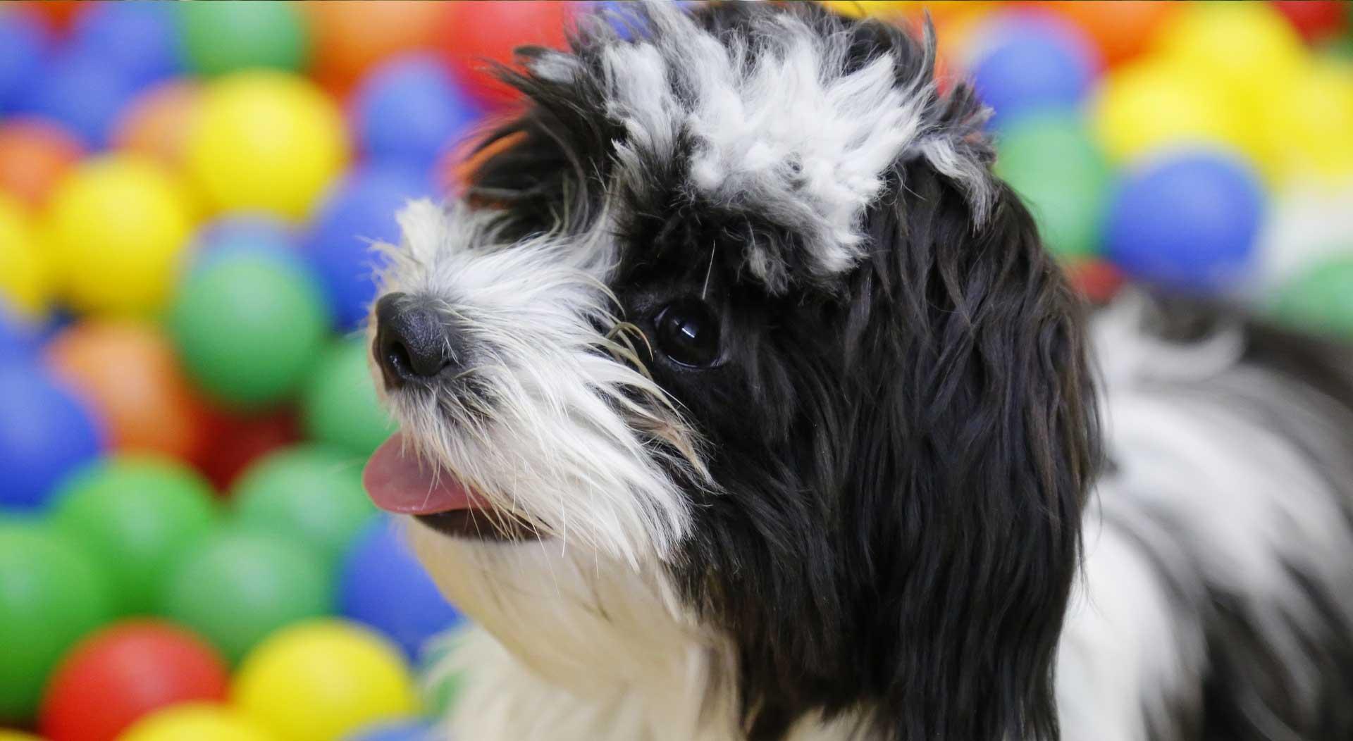 Dog daycare in Windsor
