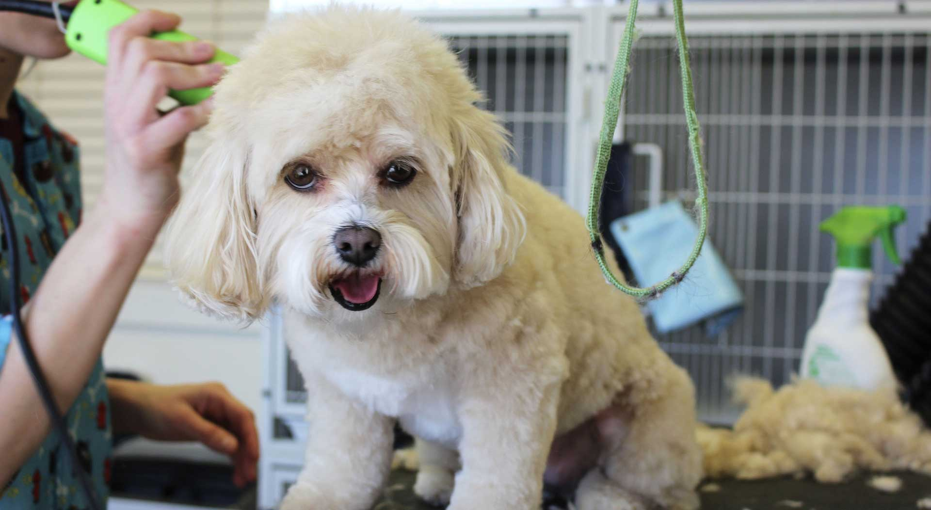 Dog grooming windsor