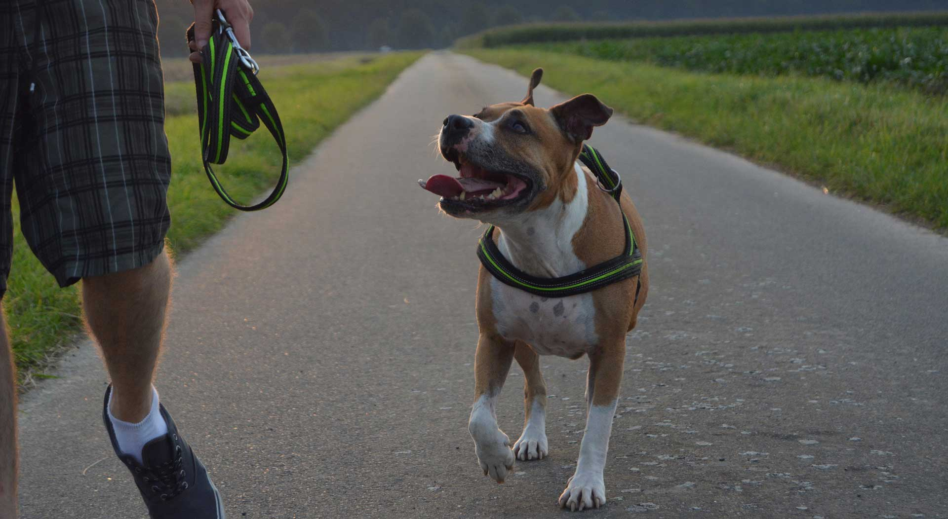 https://smoochiepoochies.ca/dog-walking/