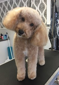 Dog Grooming, Windsor Ontario